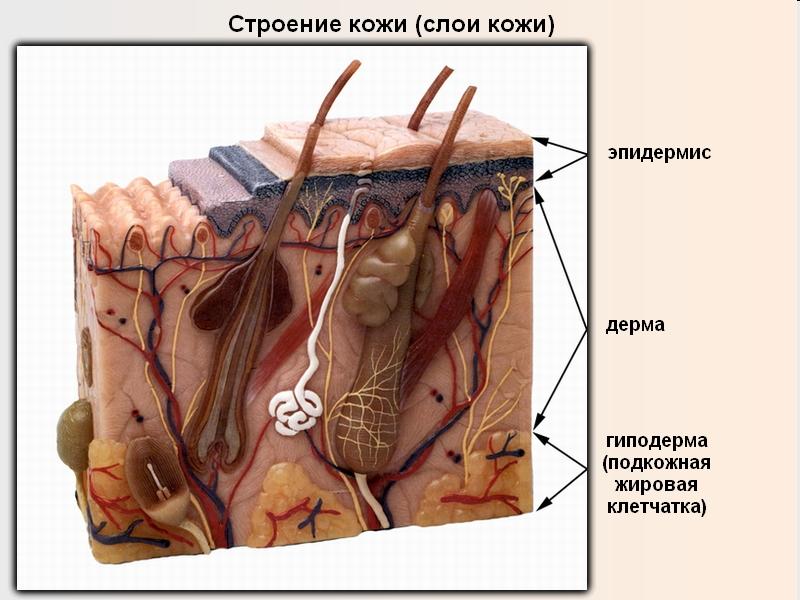 Блефаропластика век: виды, фото, противопоказания