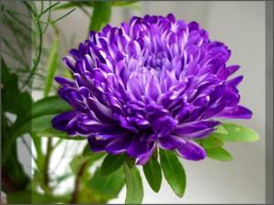Цветочный-гороскоп-19