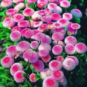 Цветочный-гороскоп-10