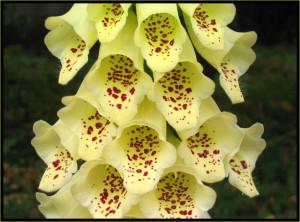 Цветочный-гороскоп-2