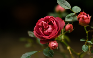Цветочный-гороскоп-14