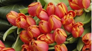 Цветочный-гороскоп-11