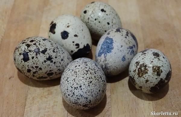 Перепелиные-яйца-Особенности-полезные-свойства-и-как-правильно-приготовить-3